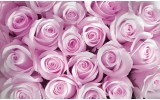 Fotobehang Vlies   Bloemen, Rozen   Roze   368x254cm (bxh)