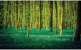 Fotobehang Vlies | Bos | Groen | 368x254cm (bxh)