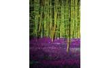 Fotobehang Papier Bos   Paars, Groen   184x254cm