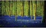 Fotobehang Papier Bos | Groen, Blauw | 368x254cm