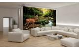 Fotobehang Bos, Natuur | Bruin, Groen | 312x219cm