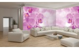 Fotobehang Vlies Bloemen, Orchidee | Paars | GROOT 624x219cm