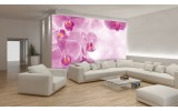 Fotobehang Bloemen, Orchidee | Roze, Wit | 312x219cm