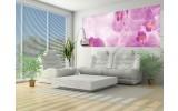 Fotobehang Bloemen, Orchidee   Roze, Wit   250x104cm