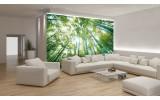 Fotobehang Papier Bos, Natuur | Groen | 368x254cm