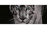 Fotobehang Wilde Dieren | Blauw | 250x104cm