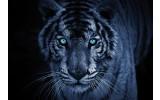 Fotobehang Vlies   Wilde Dieren   Blauw   368x254cm (bxh)
