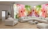 Fotobehang Vlies Bloemen | Roze, Paars | GROOT 624x219cm