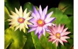 Fotobehang Bloemen | Groen, Paars | 312x219cm