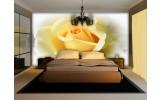 Fotobehang Bloemen, Roos | Geel | 104x70,5cm