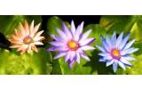 Fotobehang Bloemen   Paars, Groen   250x104cm