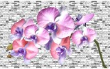 Fotobehang Vlies | Bloemen, Orchidee | Paars | 368x254cm (bxh)