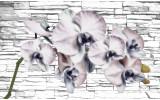 Fotobehang Vlies | Bloemen, Orchidee | Grijs | 368x254cm (bxh)