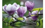 Fotobehang Vlies | Bloemen, Magnolia | Paars | 368x254cm (bxh)