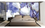 Fotobehang Papier Bloemen, Magnolia | Wit | 254x184cm