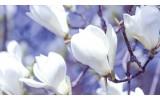 Fotobehang Vlies | Bloemen, Magnolia | Wit | 368x254cm (bxh)