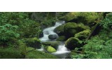 Fotobehang Natuur | Groen | 250x104cm