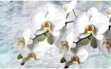 Fotobehang Orchidee, Bloemen | Wit | 208x146cm