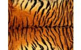Fotobehang Tijger | Bruin | 152,5x104cm