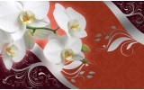 Fotobehang Orchidee, Bloem | Wit | 416x254