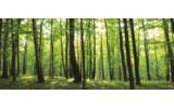 Fotobehang Bos   Groen   250x104cm