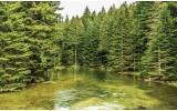 Fotobehang Bomen | Groen | 312x219cm