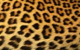 Fotobehang Luipaard | Bruin | 104x70,5cm