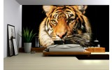 Fotobehang Wilde Dieren | Bruin | 104x70,5cm