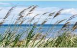 Fotobehang Strand, Zee | Blauw | 312x219cm