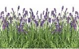 Fotobehang Natuur, Lavendel | Groen | 416x254