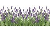 Fotobehang Natuur, Lavendel   Groen   250x104cm