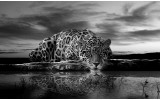 Fotobehang Jaguar, Dieren | Zwart | 312x219cm