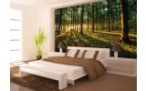 Fotobehang Bos | Groen | 152,5x104cm