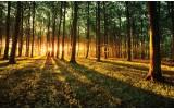 Fotobehang Bos, Natuur | Groen, Geel | 104x70,5cm