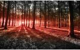 Fotobehang Bos, Natuur | Rood | 152,5x104cm