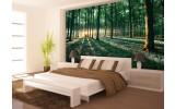 Fotobehang Bos, Natuur | Groen | 104x70,5cm