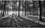 Fotobehang Bos, Natuur | Zwart, Grijs | 312x219cm