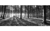 Fotobehang Bos, Natuur | Zwart, Grijs | 250x104cm