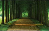Fotobehang Bos, Natuur | Groen | 416x254