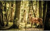 Fotobehang Bos, Hert | Bruin | 416x254