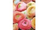 Fotobehang Papier Bloemen | Roze | 184x254cm