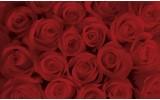 Fotobehang Bloemen, Rozen | Rood | 104x70,5cm