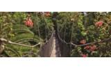 Fotobehang Bloemen, Natuur   Groen   250x104cm