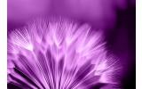 Fotobehang Vlies   Bloemen   Paars, Wit   368x254cm (bxh)