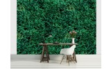 Fotobehang Natuur | Groen | 416x254