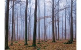 Fotobehang Bos, Natuur | Bruin | 104x70,5cm