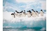 Fotobehang Pinguïn, Dieren | Wit | 152,5x104cm