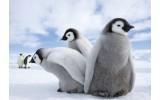 Fotobehang Vlies | Pinguïn, Dieren | Grijs | 368x254cm (bxh)