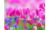 Fotobehang Bloemen, Tulpen | Roze | 312x219cm