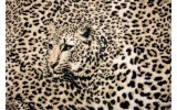 Fotobehang Papier Luipaard, Dieren | Bruin | 368x254cm